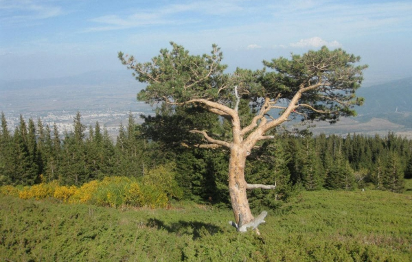 Vitosha Park – 85 years on and still a favourite getaway